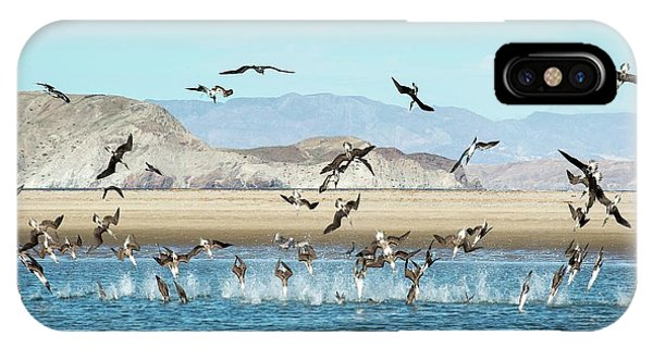 Boobies iPhone Case - Blue-footed Boobies Feeding by Christopher Swann