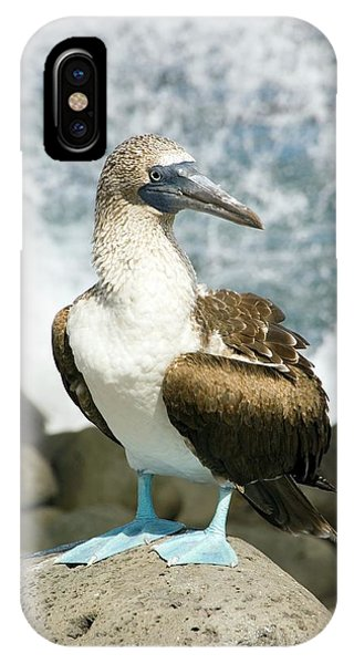 Blue-footed Booby IPhone Case
