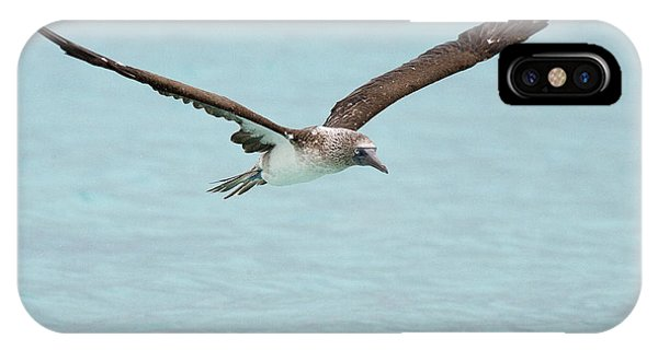 Blue-footed Booby In Flight IPhone Case