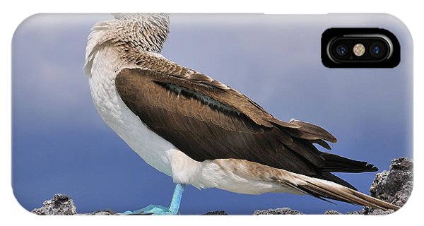 Boobies iPhone Case - Blue-footed Booby by Tony Beck