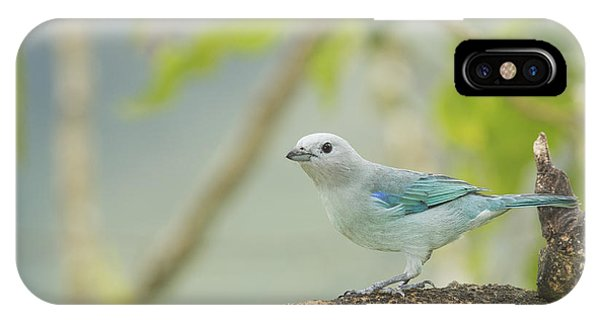 Blue-gray Tanager IPhone Case