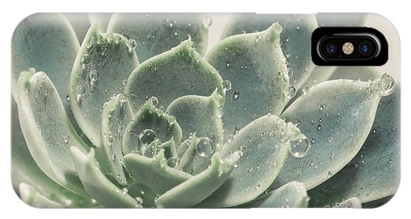 Succulent iPhone Case - Blue Green Succulent by Lucid Mood