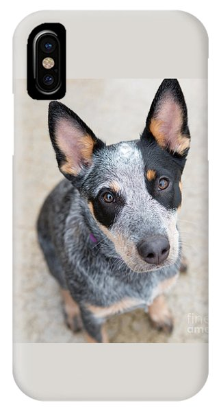 Blue Heeler 1 IPhone Case