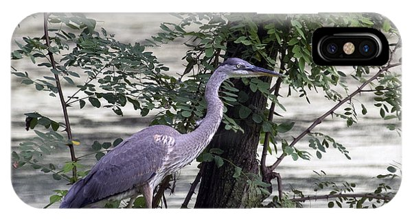Blue Heron And Duck IPhone Case
