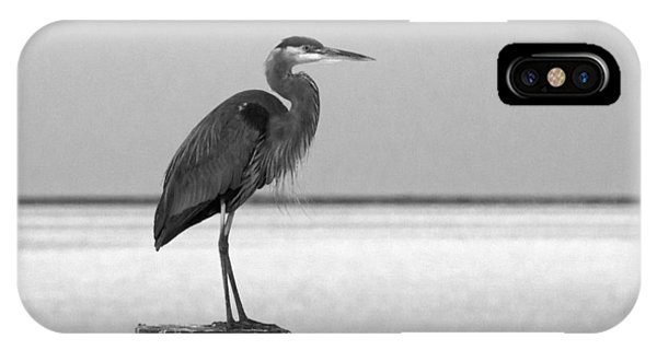Blue Heron On Post IPhone Case