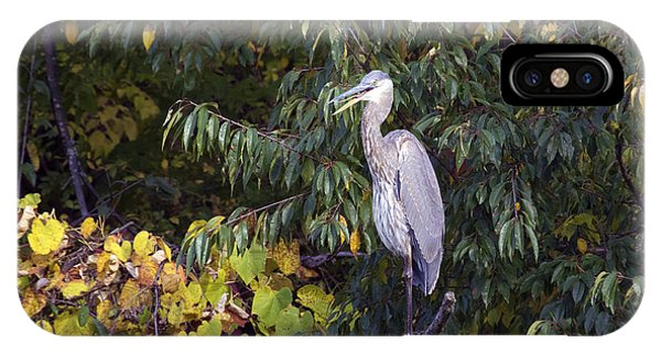 Blue Heron Perched In Tree IPhone Case