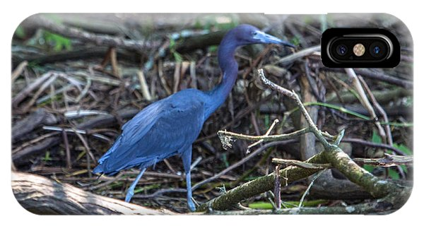 Little Blue Heron On The Banks Of An Atchafalya Bayou IPhone Case