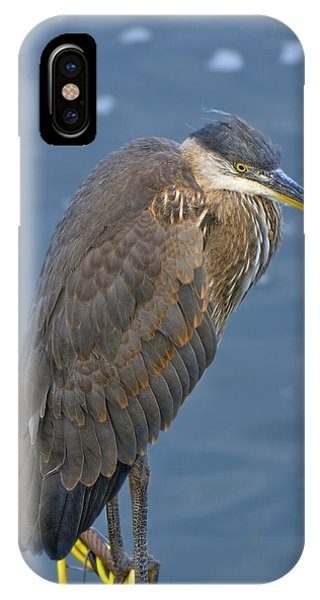 Blue Herron IPhone Case