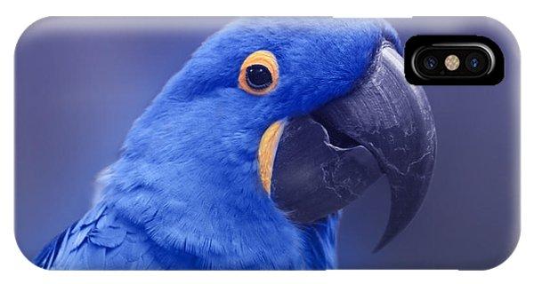 Macaw iPhone Case - Blue Hyacinth Macaw - Anodorhynchus Hyacinthinus - Puohokamoa Hoolawa Maui Hawaii  by Sharon Mau