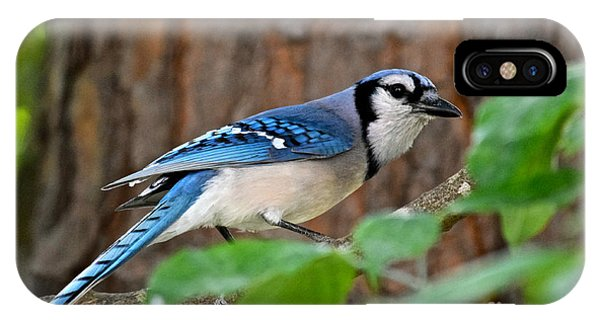 Blue Jay Beauty IPhone Case