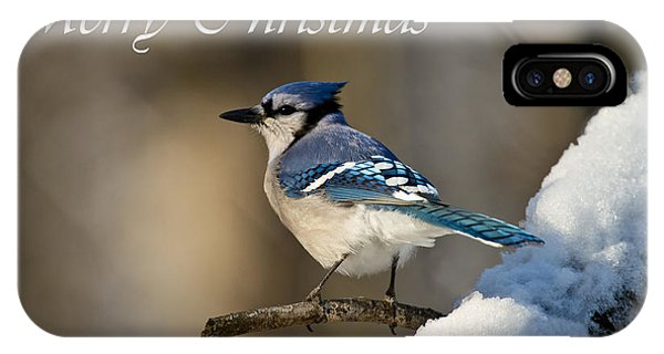 Blue Jay Christmas Card 2 IPhone Case