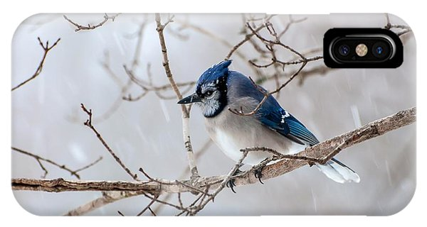 Blue Jay In Blowing Snow IPhone Case