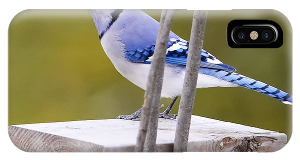 Blue Jay In Profile Phone Case by Ricky L Jones