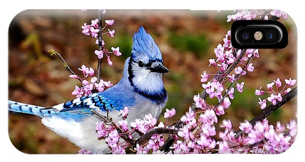Blue Jay In The Pink IPhone Case