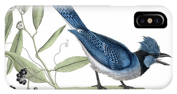 North London iPhone Case - Blue Jay by Natural History Museum, London