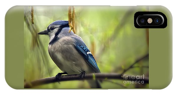 Blue Jay On A Misty Spring Day IPhone Case