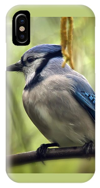 Blue Jay On A Misty Spring Day - Square Format IPhone Case