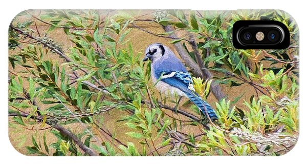 Blue Jay On Southern Wax Myrtle IPhone Case