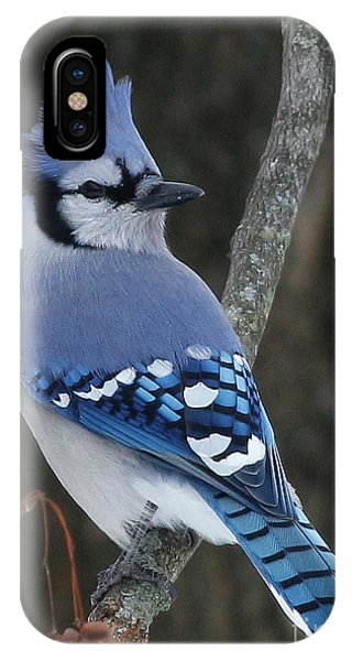 Blue Jay Winter IPhone Case
