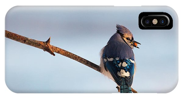 Blue Jay With Nuts IPhone Case