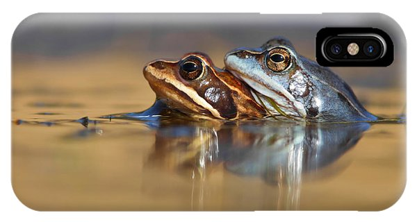 Amphibians iPhone Case - Blue Love ... Mating Moor Frogs  by Roeselien Raimond