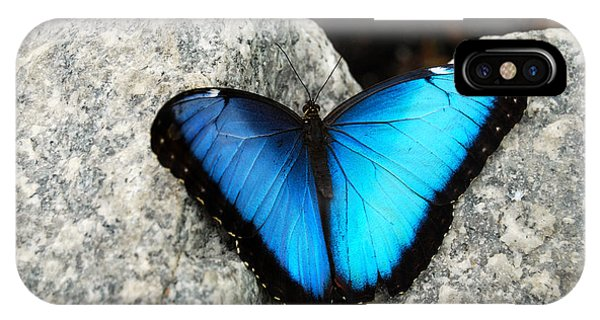 Blue Morpho Butterfly IPhone Case