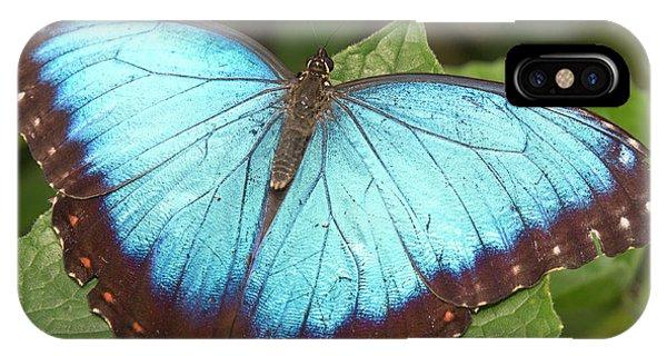 Belize iPhone Case - Blue Morpho (morpho by William Sutton