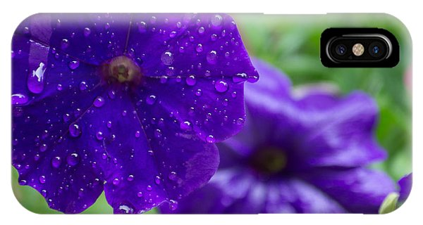 Blue Pansies After A Rain IPhone Case