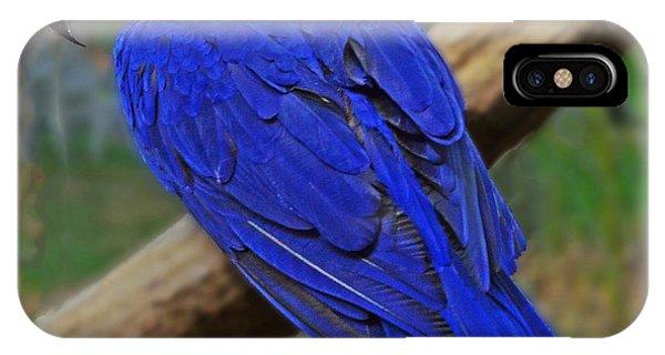 Blue Parrot IPhone Case