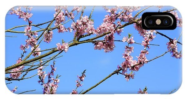 Blue Sky And Pink Blossom. IPhone Case
