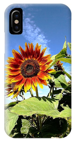 Blue Sky And Sun Flower IPhone Case