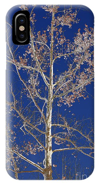 Blue Sky With A Twist Of Birch IPhone Case