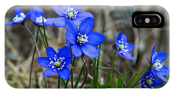Blue Springtime IPhone Case