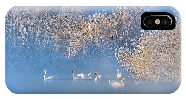 Frost iPhone Case - Blue Swan Lake by Hua Zhu
