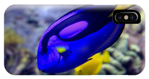 Blue Tang Dory IPhone Case