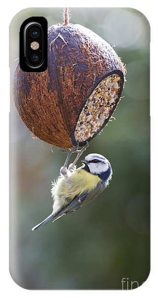Titmouse iPhone Case - Blue Tit Feeding by Tim Gainey