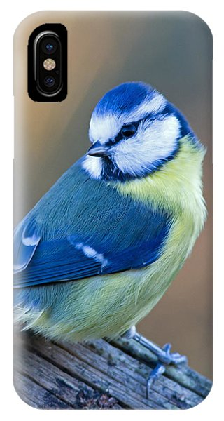 Blue Tit Looking Behind IPhone Case