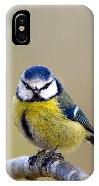 Blue Tit IPhone Case