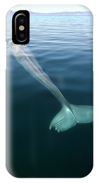 Blue Whale Surfacing Phone Case by Christopher Swann/science Photo Library