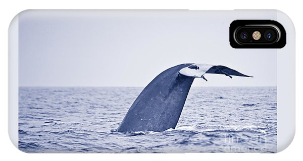 Blue Whale Tail Fluke With Remoras IPhone Case