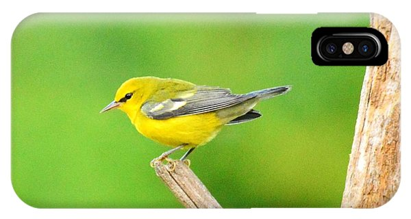 Blue-winged Warbler Phone Case by Judy Genovese