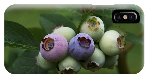 Blue Berry iPhone Case - Blueberry (vaccinium Sp.) by Brian Gadsby/science Photo Library