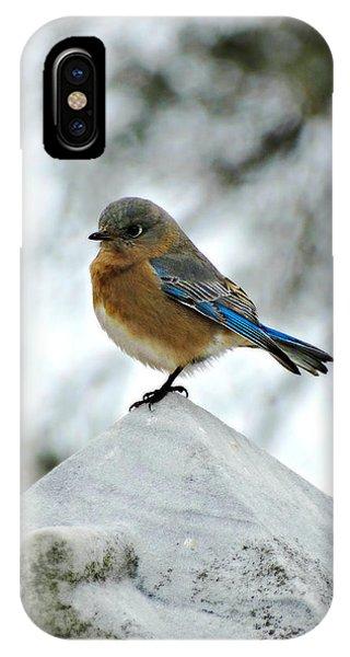 Bluebird 3 IPhone Case