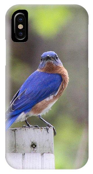 Bluebird  Phone Case by Brad Fuller