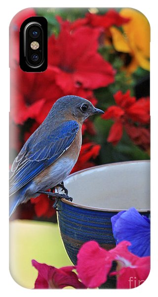 Bluebird Breakfast IPhone Case