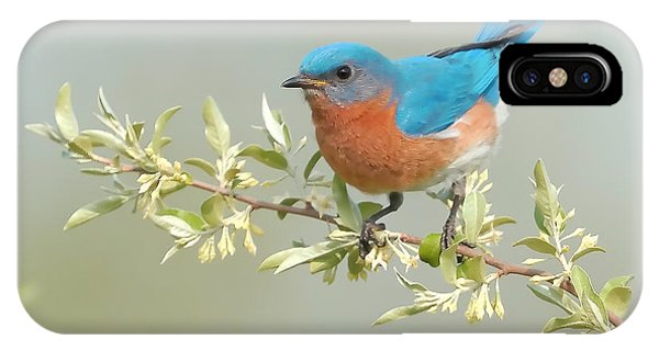 Bluebird iPhone Case - Bluebird Floral by William Jobes