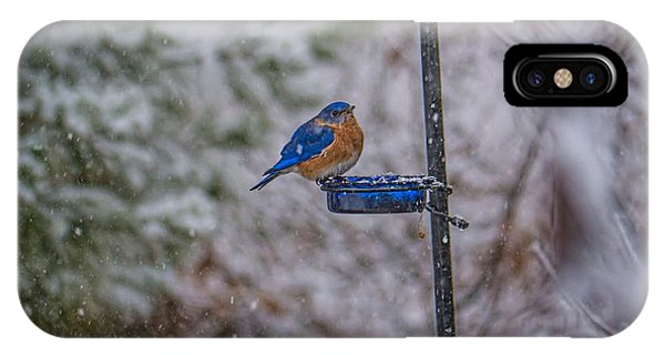 Bluebird In Snow IPhone Case