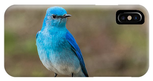Bluebird In Yellowstone Spring IPhone Case