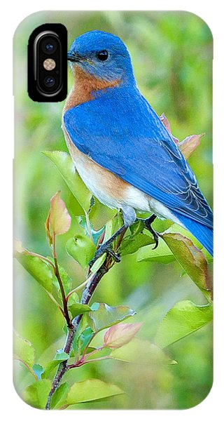 Bluebird iPhone Case - Bluebird Joy by William Jobes