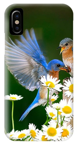 Bluebirds And Daisies IPhone Case